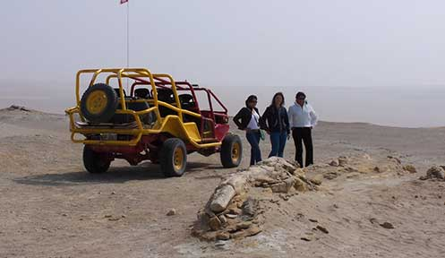 Paleontology Tours in Ocucaje Desert