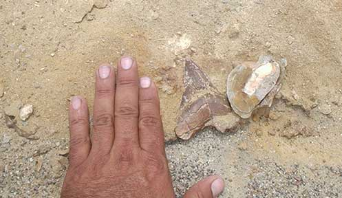 Paleontology Tours in Ocucaje Desert 3